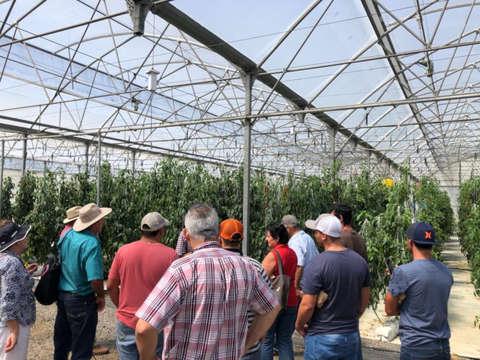 Proyecto de nuevos invernaderos para agricultores escazuceños - Octubre - 2019